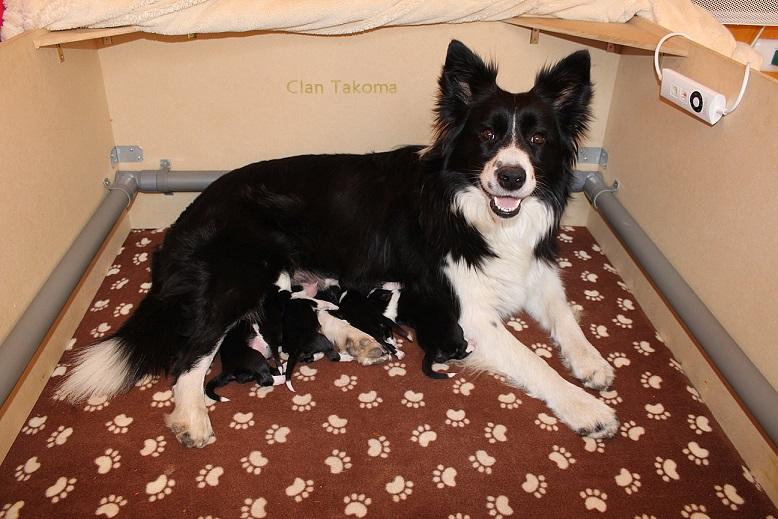 Clone Chile tiene el orgullo de presentar La Nueva Camada Nacida con Semen Canino Congelado